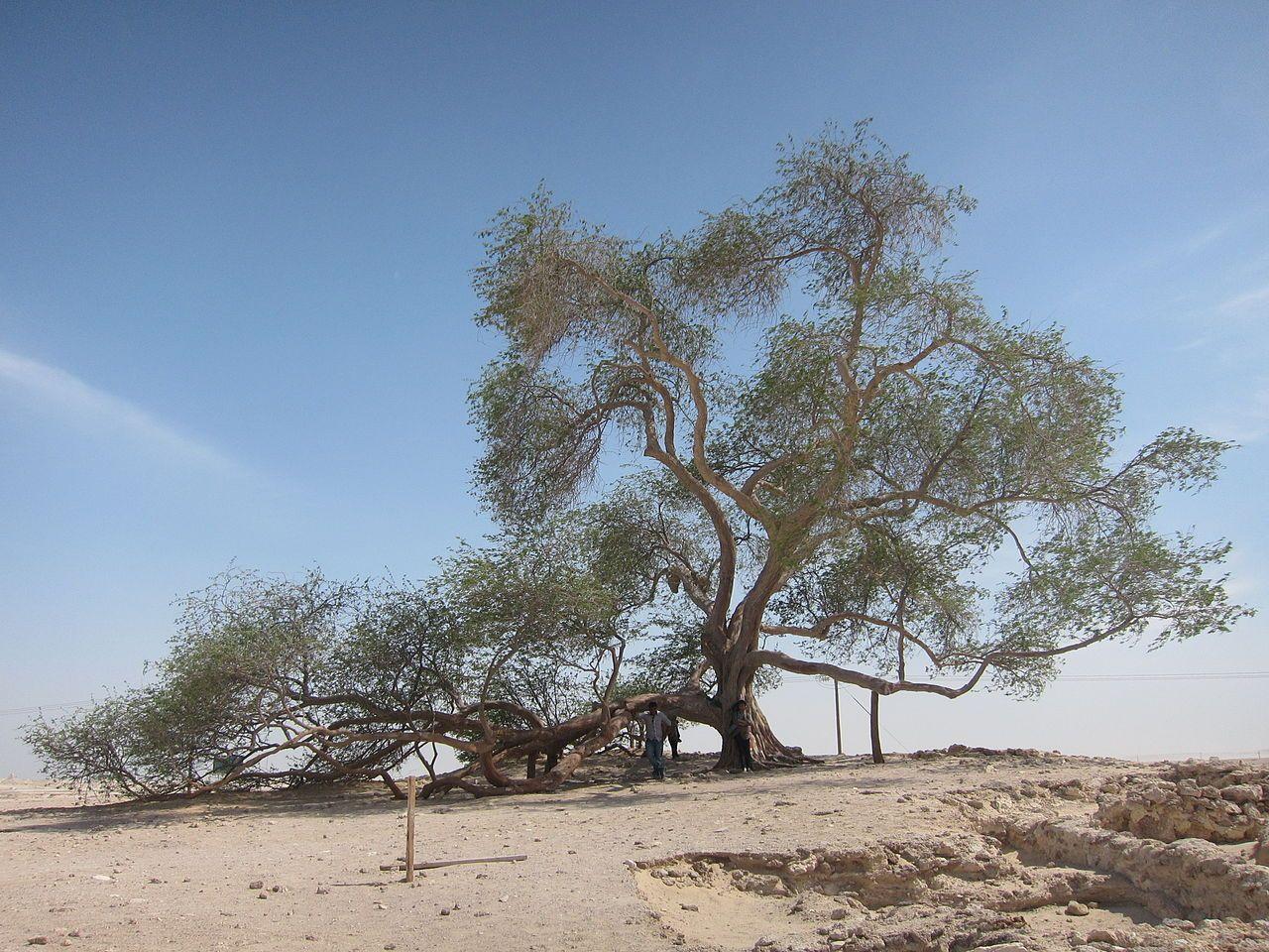 Bedeutung Lebensbaum Bahrain